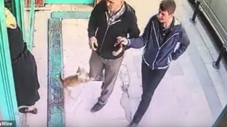 Macja agresive ndaj kalimtarëve, nuk sulmon gratë dhe fëmijët (Video)