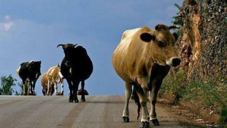 Ia vjedhin lopët