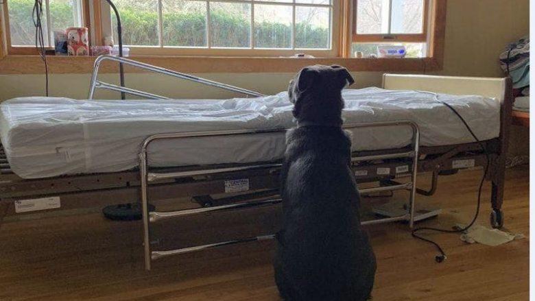 Mijëra kërkesa për të adoptuar qenin që u fotografua pranë krevatit të spitalit ku i zoti vdiq